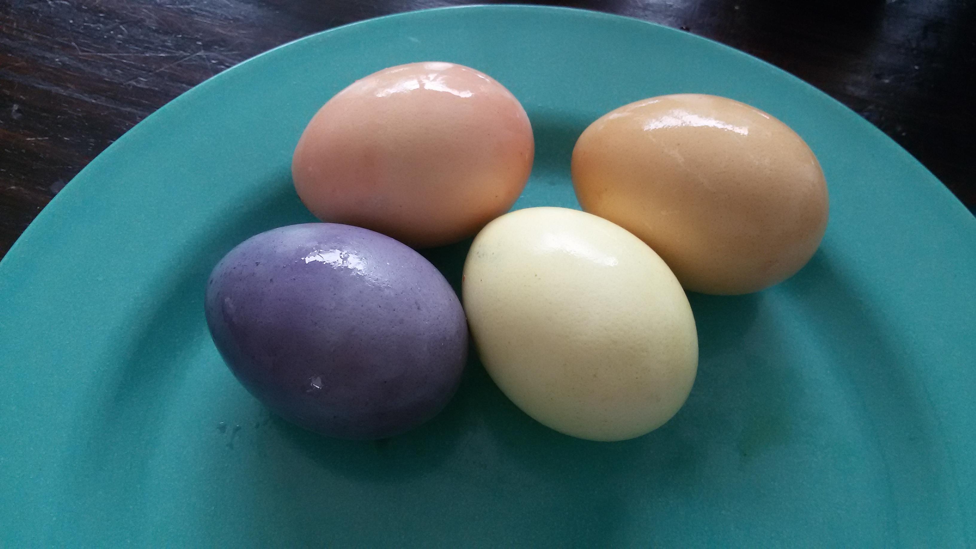 Paaseieren kleuren met natuurlijke kleurstof   kaboutertuin