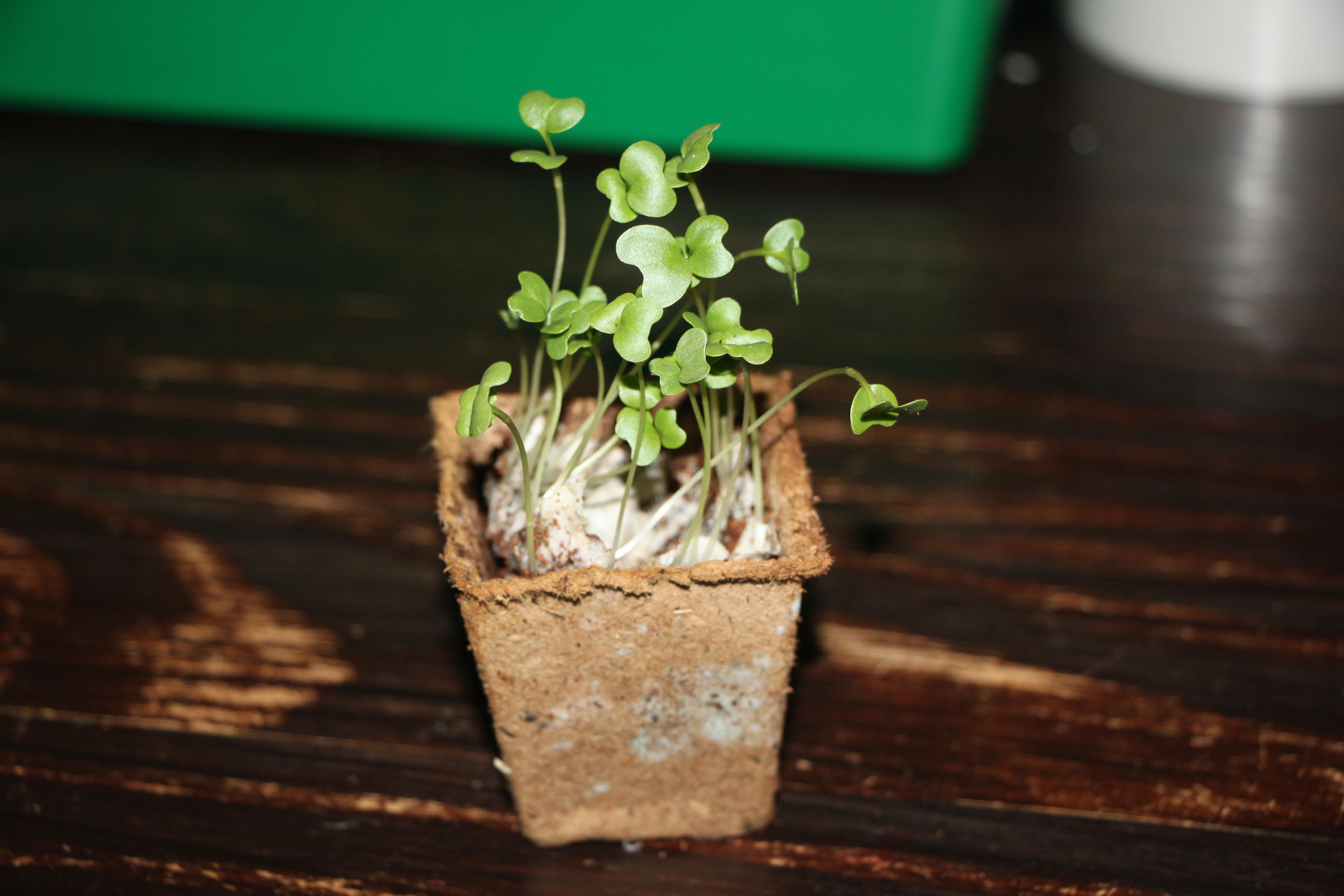 Mini Moestuintjes Ah Verpotten Of Verspenen Kaboutertuin
