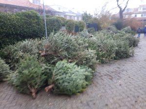 vakantie kerstbomen slepen sleep je groen